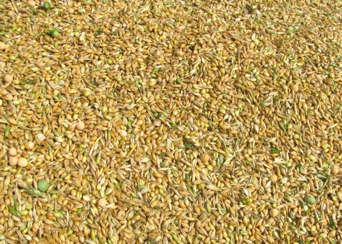 Преимущества технологии изготовления и консервирования плющеного зерна, экономический эффект от ее применения